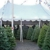 Riverside Christmas Trees