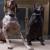 West End Pet Services, LLC