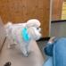 Kellianne's Dog Shack