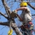 Aspen Tree Service, LLC