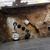 A-Concrete Cutter & Sons INC