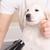 Dippity Do Dog Pet Grooming Salon