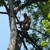 All Around Tree Specialists LLC