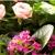 Jeff's Flowers