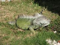 Native Guidance, Summerland Key FL