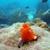 Diving Miami Beach