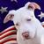 All American Pets, Inc.