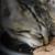 Laguna Beach Animal Shelter