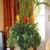 Tropical West Design