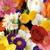 Parkland Flower Girl