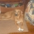 Morgan County Animal Shelter
