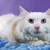 Kentucky Humane Society adoptions at Springhurst Feeders Supply