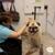 Adorable Dog Grooming
