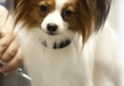 Healthy Pets Of Westgate - Columbus, OH