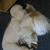 South Paws Pet Spa