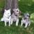 LITTLE DOG INN, LLC.