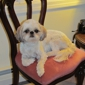 Immaculate Pooch Grooming - Leicester, MA