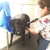 K-9 to 5: Mobile Dog Grooming