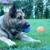 Farmington Dog Sitter