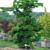 Susanna Farm Nursery Inc