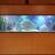 Aquarium Environments