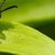 Farmers Branch Pest Control Service