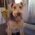 Purrty Pups Mobile Pet Grooming