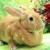 New Hanover County Rabbit Rescue of Wilmington; Inc.