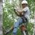 Affordable Carolina Tree Service