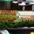 C & L Hibachi Grill & Supreme Buffet - CLOSED