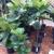 Plant Ranch Nursery