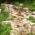 Aquatic Rock Formations, LLC