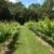Southwind Vineyard
