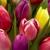 Ousterhout's Flowers