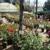 El Plantio Nursery