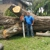 Sykes Trees & More, Inc.