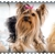 Hairy Hound Mobile Dog Grooming