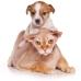 Fidosit Pet Sitter