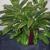 Intergreen Foliage Inc