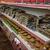 La Placita Market