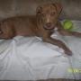 Villalobos Pitbull Rescue Center - New Orleans, LA
