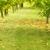 Tree Care Inc
