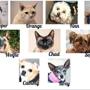 Aloro Pet Clinic