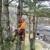 Limber Tree Services