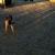 Doggie Daycare & Motel