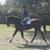 Amazing Grace Equestrian
