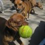 Citizen Canine - Chicago, IL