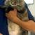 Mixed Pet Veterinary Hospital Stonecrest