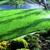 Mesquite Landscape & Lawn Care