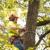 Arbor Tree Care Columbus